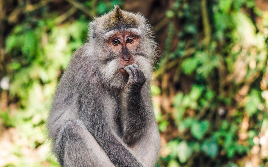 mono-pensando-en-dejar-el-trabajo-para-hacer-trading